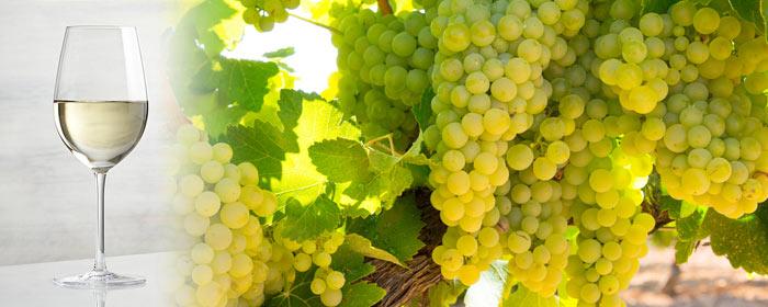 Chardonnay-Wein – die  gute Alternative zu gewöhnlichem Weißwein