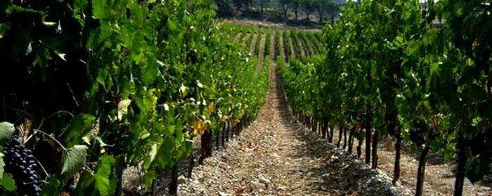 Eine der jungsten Weinregionen Spaniens - D.O. Uclés