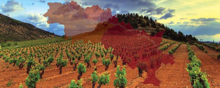 Rioja - der beliebte spanische Rotwein