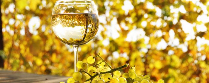 Zweitwichtigste weiße Rebsorte Spaniens - Sauvignon Blanc