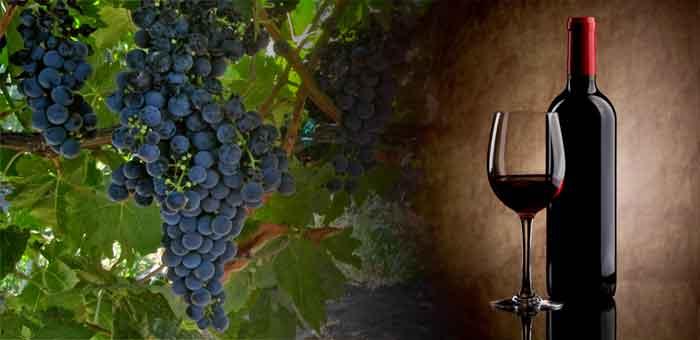 Tempranillo Wein: Arten von spanischen Weinen