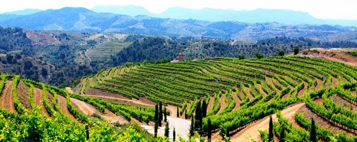 Spanisches Weinbaugebiet Priorat: seine Rebsorten