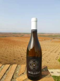 Weißwein Hacienda Molleda Blanco Garnacha